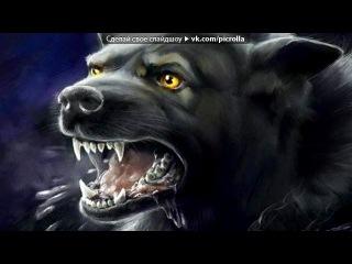 Волк под музыку мурат тхагалегов я